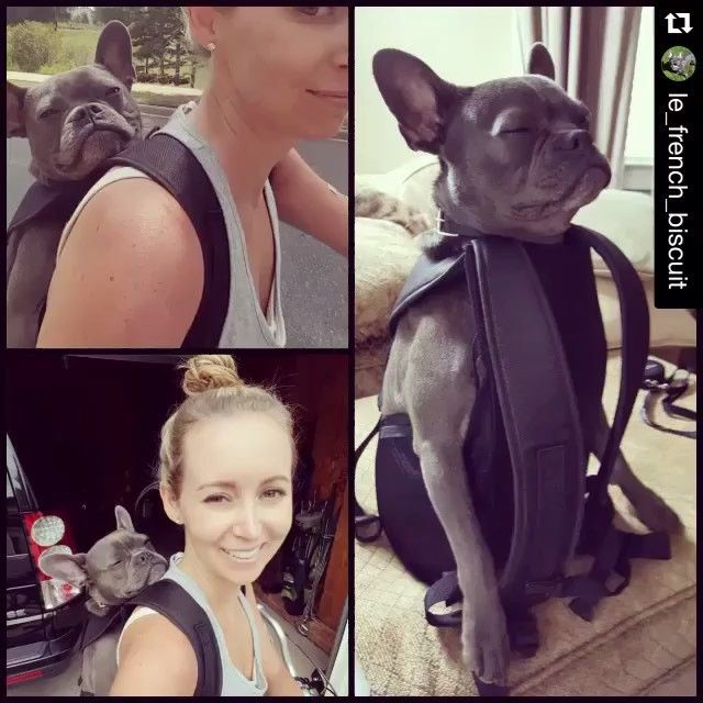@le_french_biscuit  looks like he's deep into meditation ❤️ so cute! Does anyone else's pup do this? ・・・ Took this clown on a bike ride today. How can I not smile at this goof ball who falls asleep before I even put the carrier on my back?! #dogbackpack #frenchbulldog #frenchie