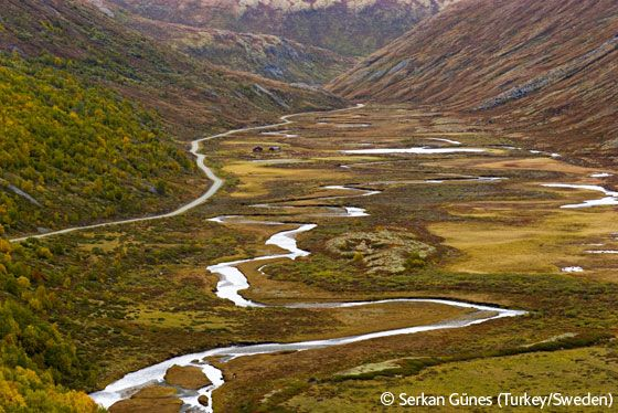 The great valley - Serkan Günes - Wildlife Photographer of the Year 2006 : Eric Hosking Portfolio Award - Winner