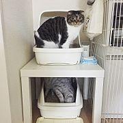 Lounge,IKEA,猫トイレ,猫との生活,ねこと暮らすに関連する他の写真