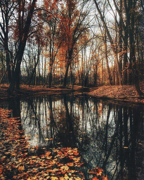 Before the icy, sludgy, dark and muddy depths of winter arrives, we have a season of mellow, golden, crispy-leaved abundance of autumn to enjoy. #autumnal #leaves #trees