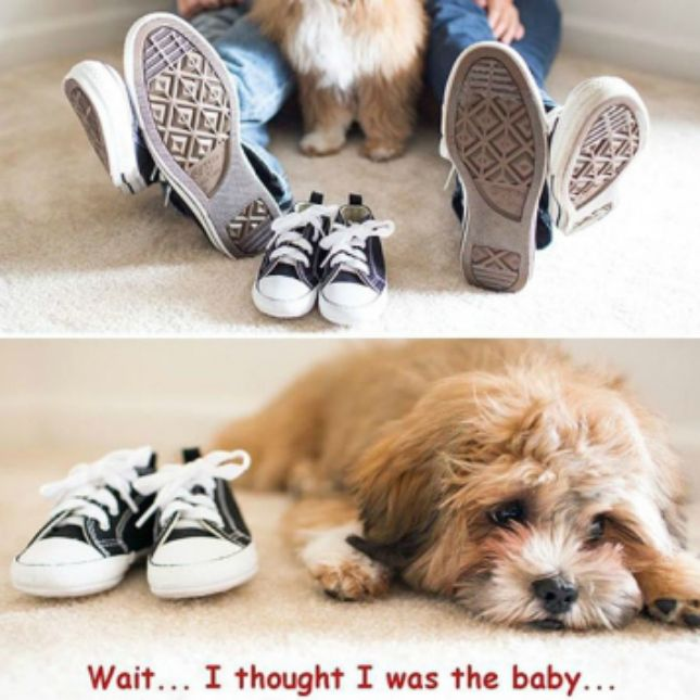 13 Creative Pregnancy Announcements With Your Pets | Brit + Co
