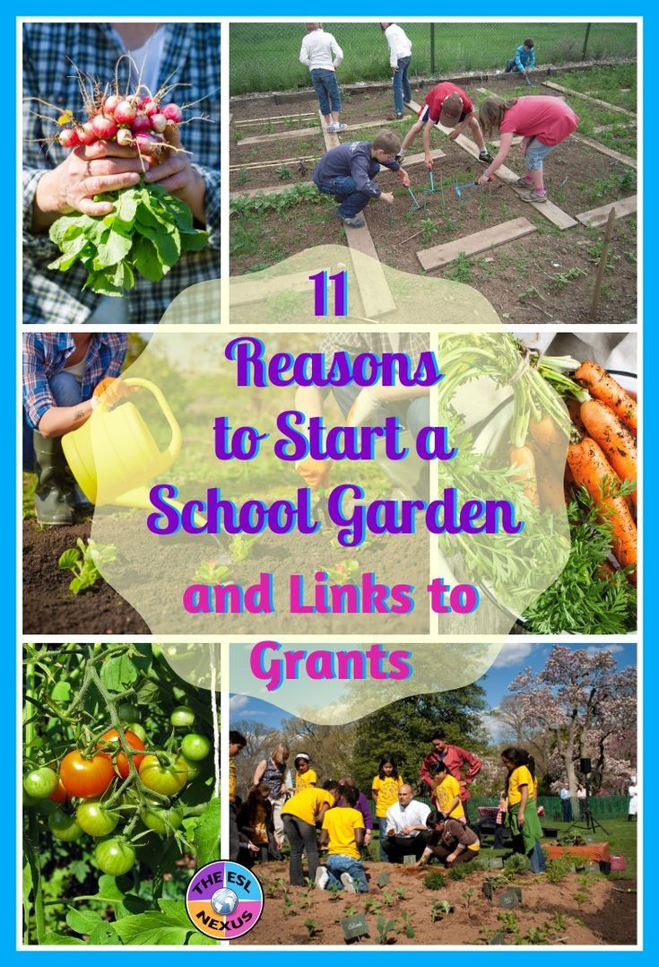 93d58dc60e214be95194a171c9dae831 - Why Gardening Should Be Taught In Schools