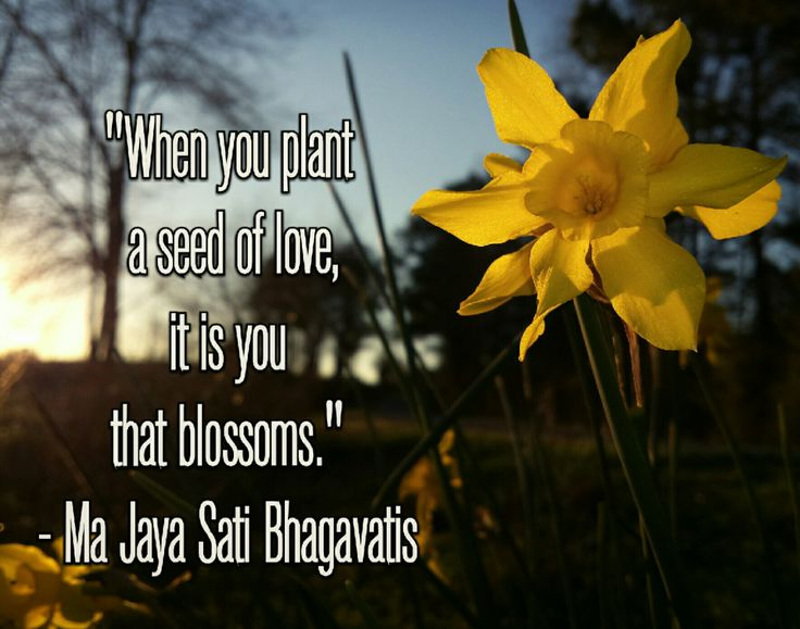 """When you plant a seed of love, it is you that blossoms."" - Ma Jaya Sati Bhagavati"