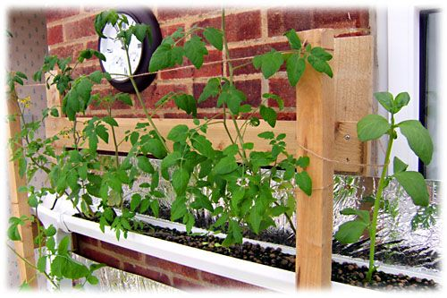 My vertical hydroponic growing setup has enabled me to grow abundant food in a tiny space