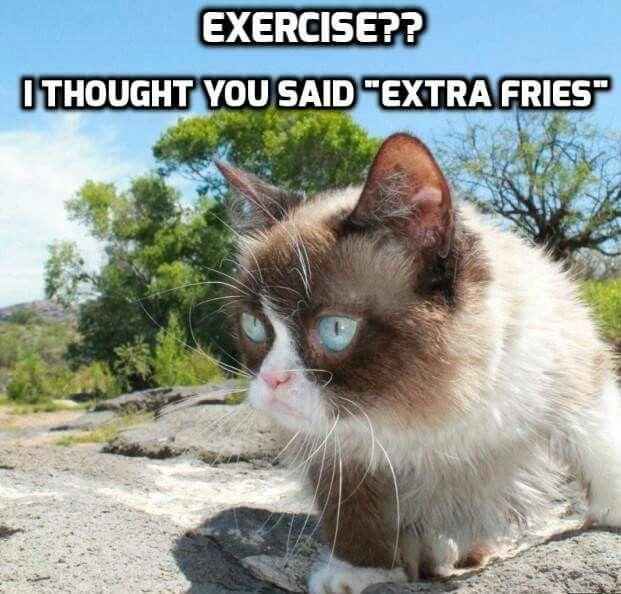 17 Best images about Grumpy Cat on Pinterest | Grumpy cat ...