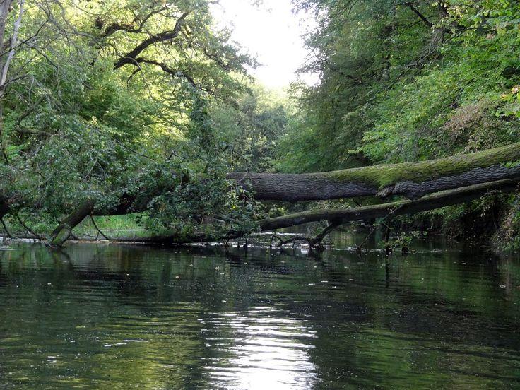 Rezerwat Dziektarzewo