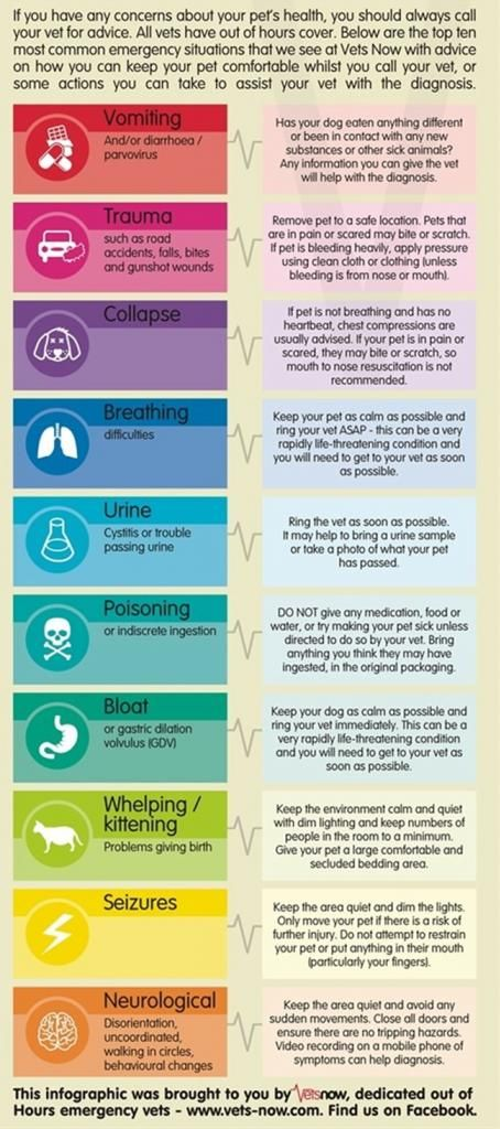 Emergency Veterinary Advice for Sick Pets