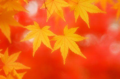 ちょっと美しい日本語~季節に関係する言葉