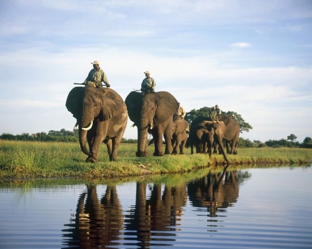Abu Camp offers the unique opportunity to bond with elephants first hand.  http://www.africanwelcome.com/botswana/botswana-private-game-lodges/abu-camp-botswana
