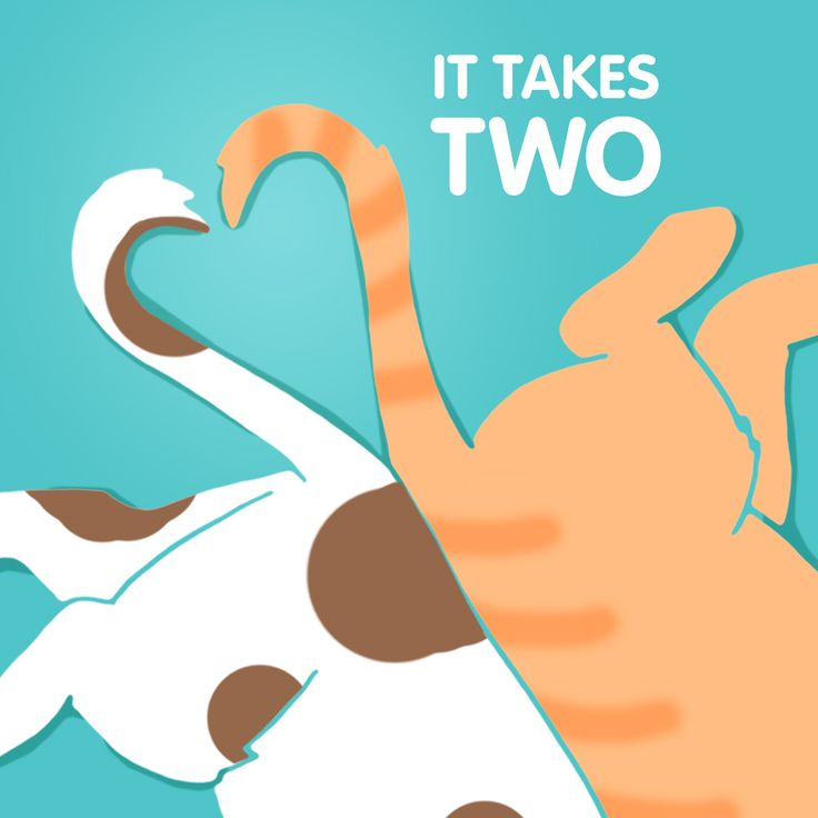 Thinking of adoption? Adopting two cats means more companionship for each other and your family—plus, they'll always have another feline to play with! Visit Petcentric.com for tips on how to manage a multiple cat household!
