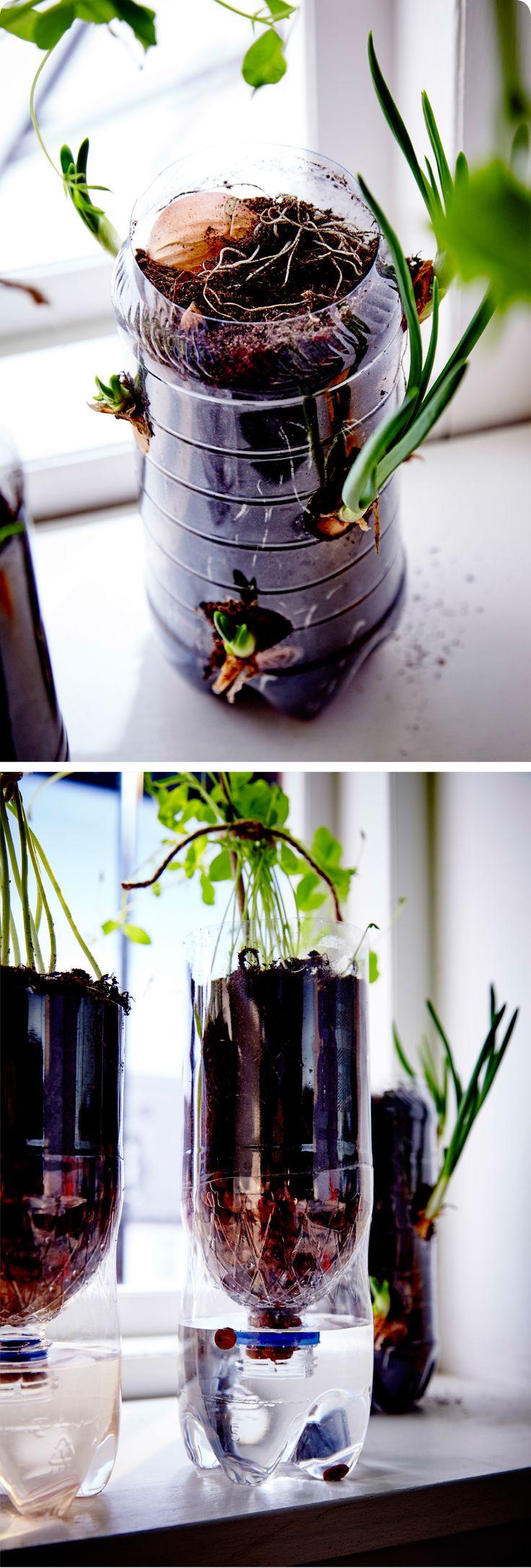 On recycle les boites de conserve et les bouteilles en plastique pour se créer un petit jardin aromatique dans la cuisine. http://goo.gl/YYqn3Y
