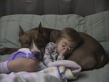 """""""Pitbulls scored above 121 other dogs in terms of temperament (yup, above Golden Retrievers!).  Maybe this is why they used to be called 'nanny dogs.'"""""""