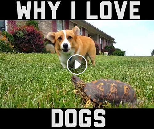 Οι πιο αστείες στιγμές σκύλων!