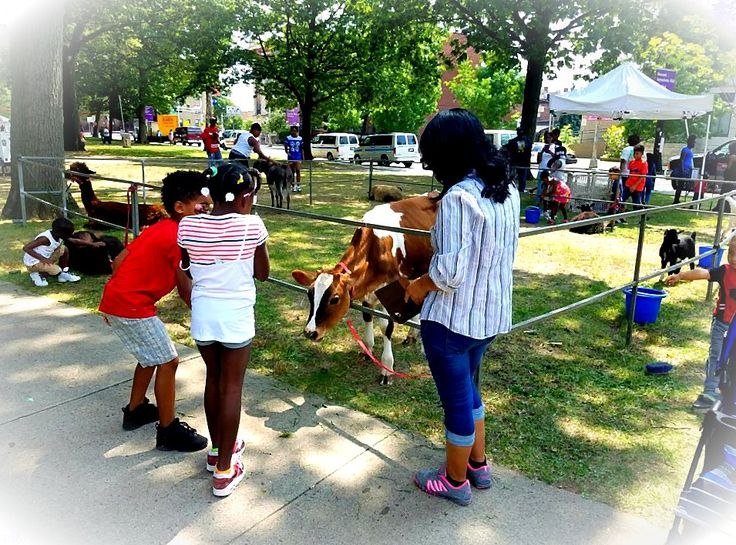 Newark Kids Rock had our petting zoo and 4 pony carousel