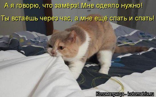 А я говорю, что замёрз! Мне одеяло нужно! Ты встаёшь через час, а мне ещё спать и спать!