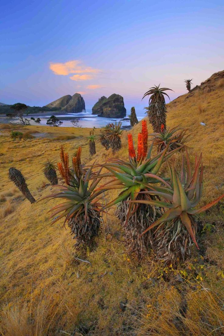 The Eastern Cape Beaches The Eastern Cape is the place for a real beach holiday. Port Elizabeth, East London, Jeffrey's Bay, Cape St Francis and, to a lesser extent, Port Alfred all revolve around their beaches.