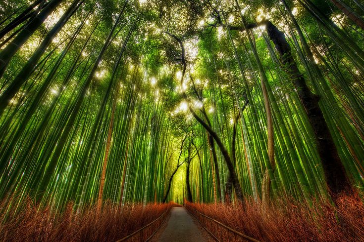 Kyoto Bamboo forest