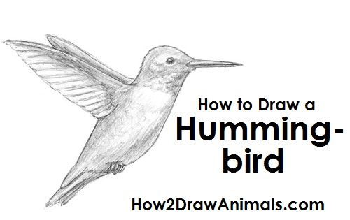 how to draw black birds