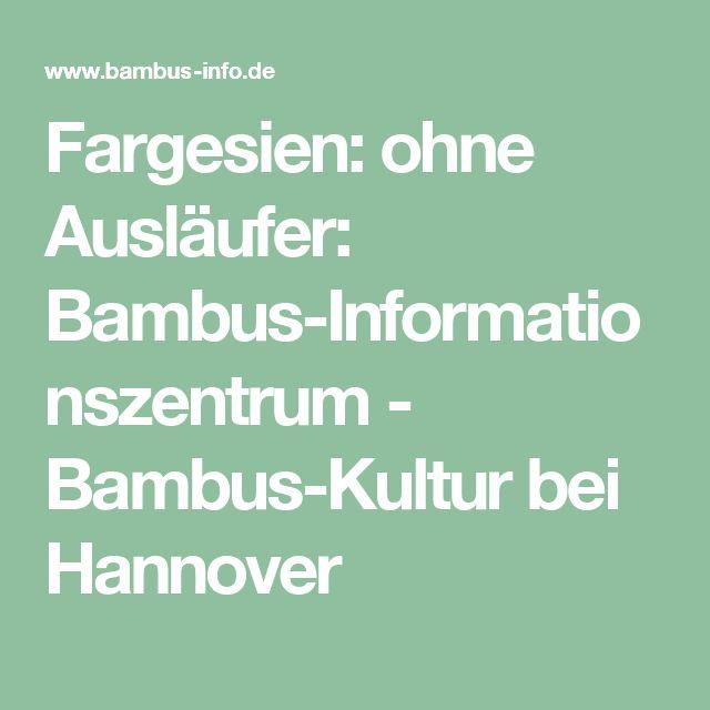 Fargesien: ohne Ausläufer: Bambus-Informationszentrum - Bambus-Kultur bei Hannover