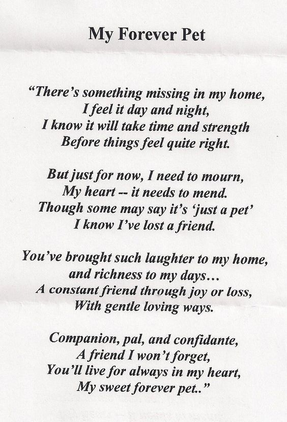 loss of a pet quotes - Google Search