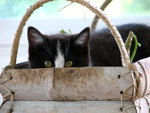 Cats That Think They're Hiding