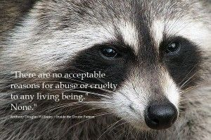 """There are no acceptable reasons for abuse or cruelty to any living being. None."""" Anthony Douglas Williams """"Inside the Divine Pattern""""."""