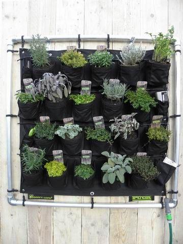 Oltre 25 fantastiche idee su piante in vaso su pinterest - Porta piante aromatiche ...