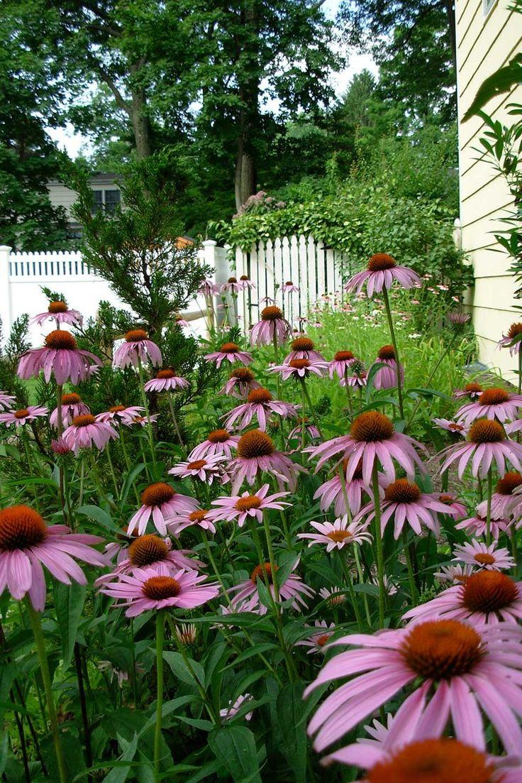 39+ Inspiring Butterfly Garden Design Ideas in 2020
