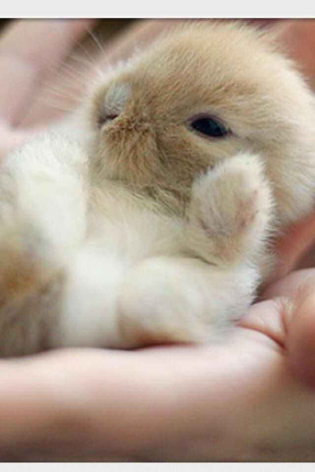 602 best Rabbits images on Pinterest Bunnies, Baby bunnies and - resume rabbit cost