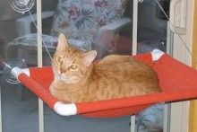 PVC-Cat-janela-poleiro