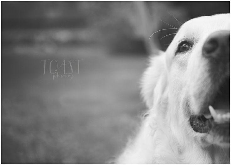 Dog portrait, TOAST photos.