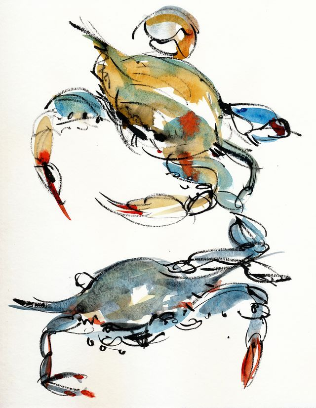 Blue crabs x 2 - beautiful loose watercolor sketches