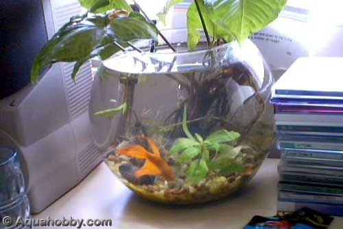 17 best images about fish bowl habitats on pinterest for Cleaning fish bowl