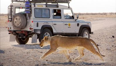 Are you searching for 4x4 Rental service providers in South Africa to explore?  Bushlore provides 4x4 rental services, camper services at affordable cost.
