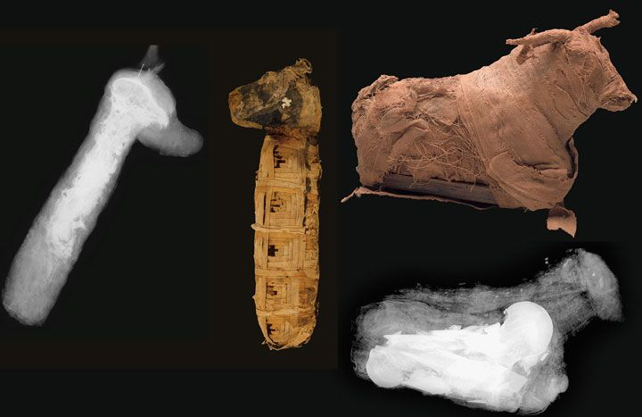 Bone dating in archaeology