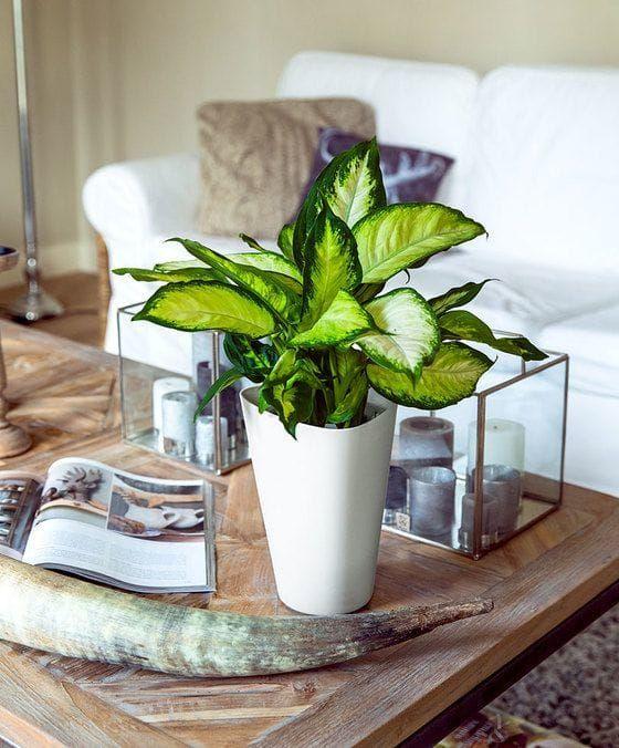 5x izbové rastliny, ktoré budú krásne aj v tmavých kútoch!