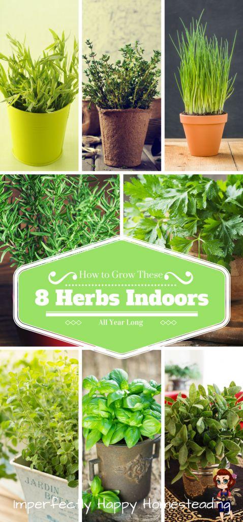 25 best ideas about growing herbs indoors on pinterest growing plants indoors how to grow for How to grow an indoor herb garden