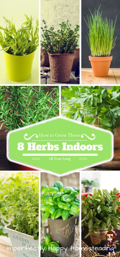 How to Grow 8 Awesome Herbs Indoors All Year Long