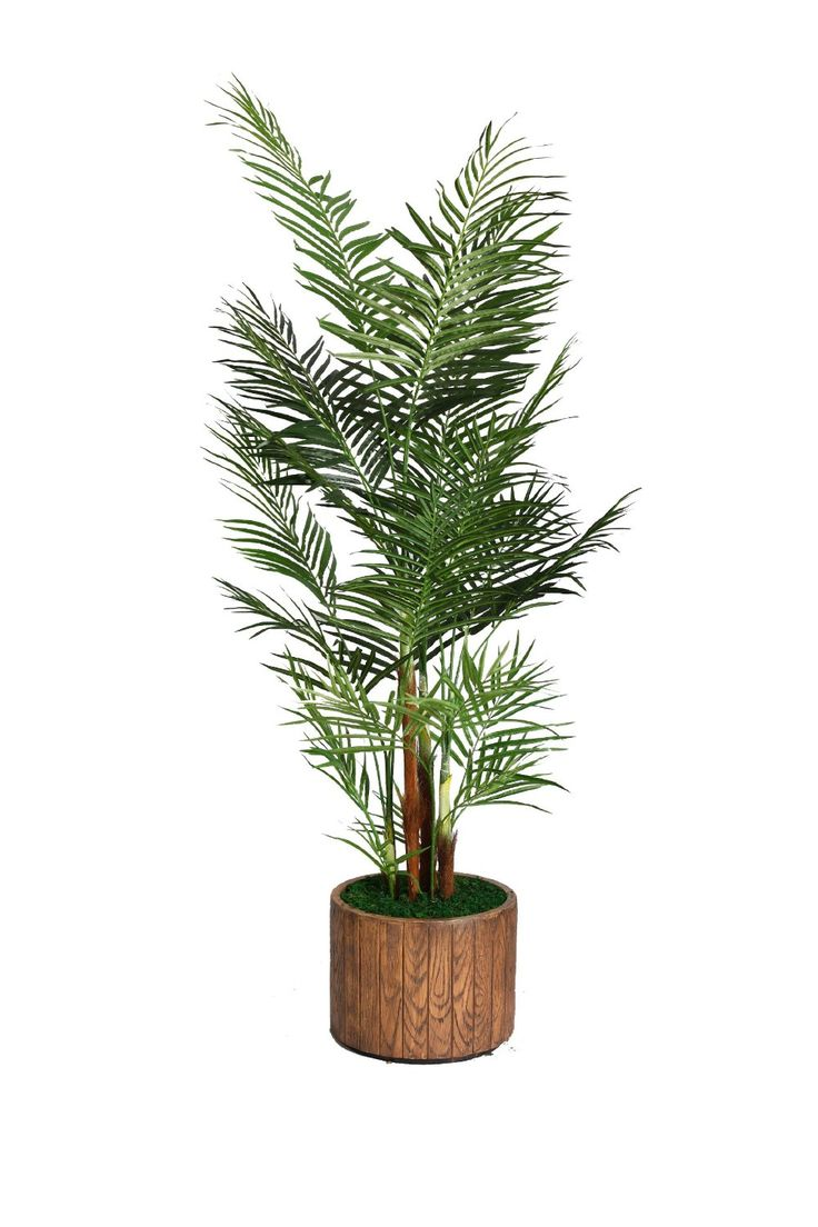 Preserved cypress bonsai 7 h contemporary phoenix by botanical - Laura Ashley 73 Inch Tall Palm Tree In 16 Inch Fiberstone Planter You