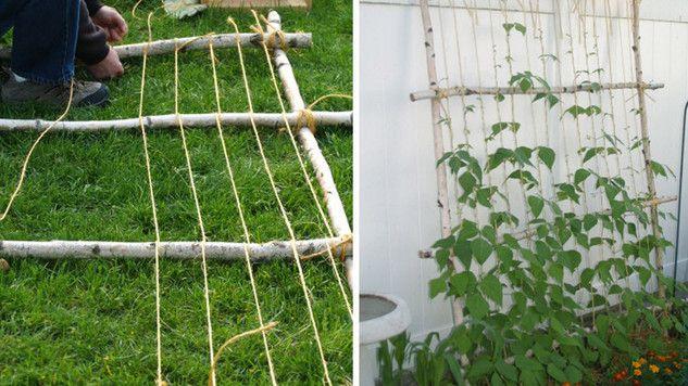 Tuto Fabriquez Vous Meme Votre Support De Plante Grimpante M6 Deco Fr Plante Grimpante Support Plante Treillage Jardin