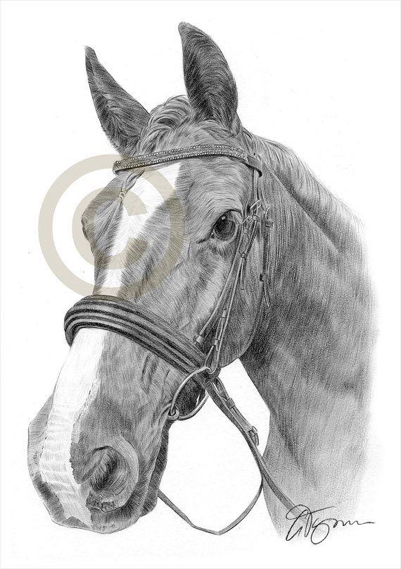Hengst Pferd Bleistiftzeichnung print A4-Größe Kunstwerk