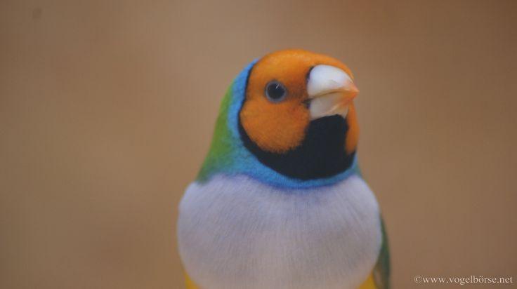 Home - Vogelbörse Vogelschau Vogelausstellung Termine Veranstaltungskalender Kleintierschau Exotenschau