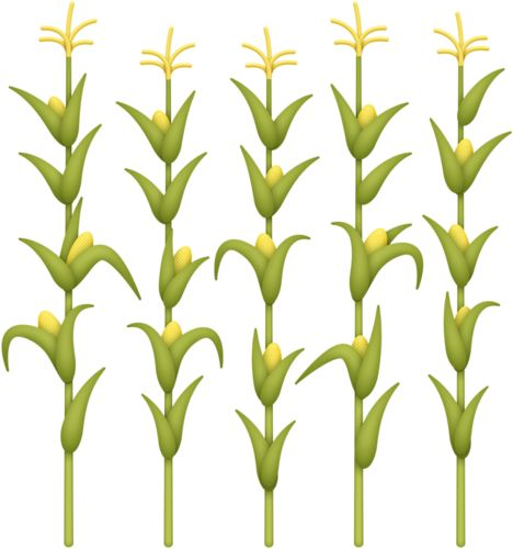 1730 best images about clipart on pinterest blog page for Corn stalk template