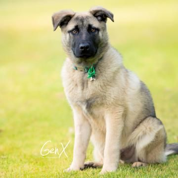 Miller, wonderful pet for Tiff and Chandler by Casey from GenX Photography, Launceston Pet Photographer
