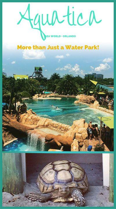 Aquatica Orlando: More than Just a Water Park