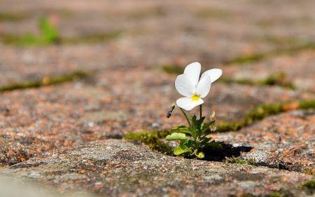 THE WILL TO SURVIVE - Flowers Wallpaper ID 1133753 - Desktop Nexus Nature
