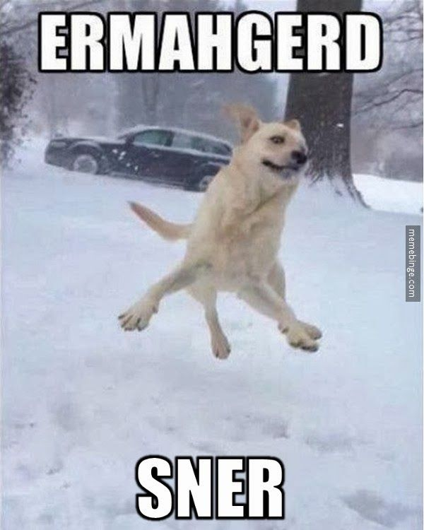 Image result for site:pinterest.com dog playing in snow