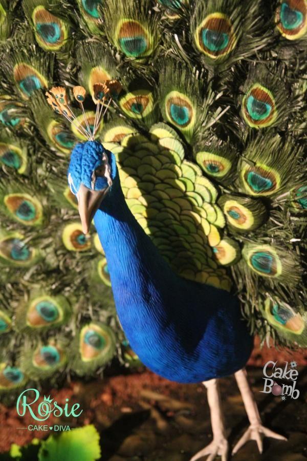 Percy the peacock essay