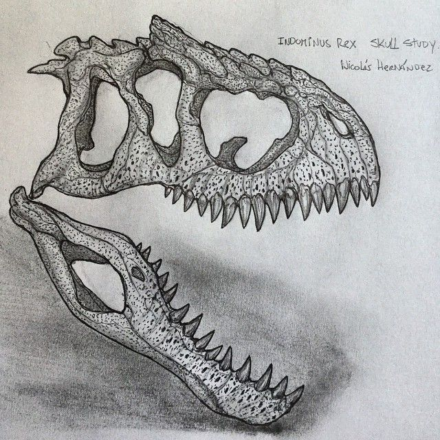 Back to drawing... Indominus Rex skull study! drawing
