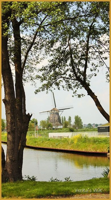 View on mill de Valk Berkel en Roderijs ( near Delft)